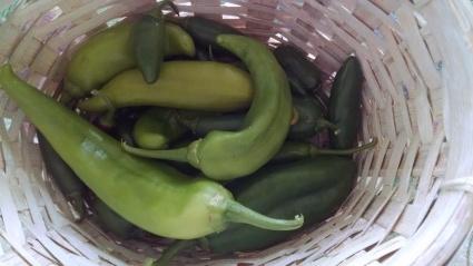 Garden chile Aug 2014