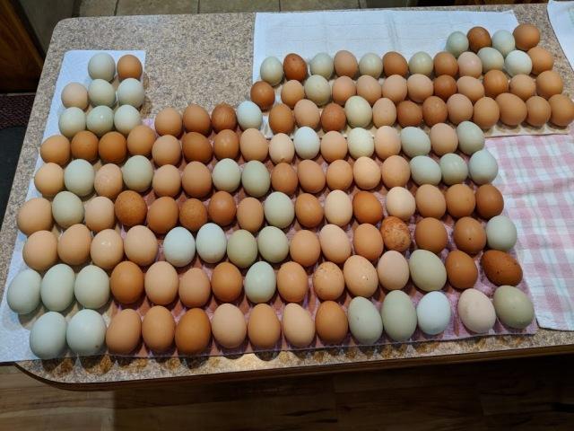 Eggs Feb 2018